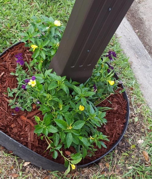 Mailbox Garden Initial